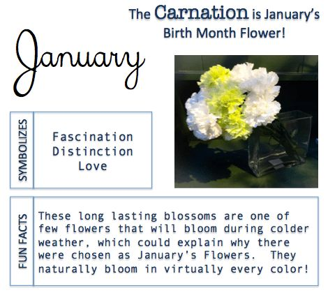 January Birthstone And Birth Flower: Meaning and Significance