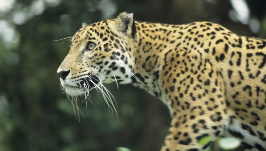 Heterotrophs & Autotrophs in the Tropical Rainforest | Sciencing