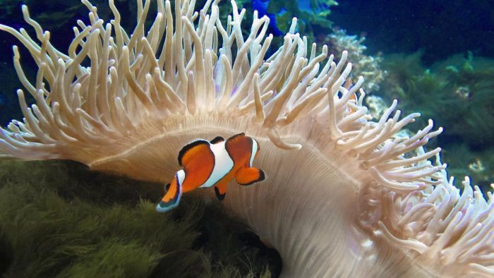 What are examples of commensalism in the ocean? | Reference.com