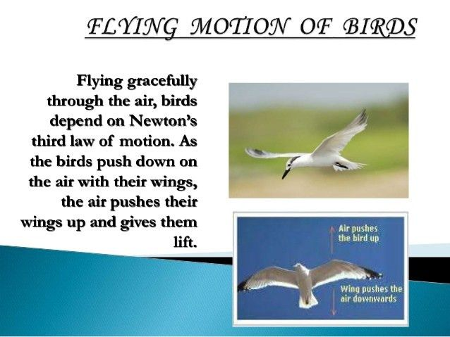 Newton third law of motion ppt