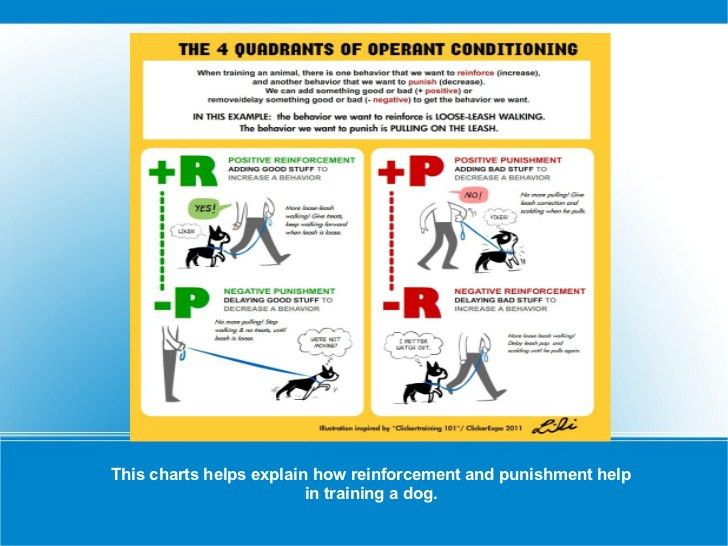 Reinforcement & Punishment