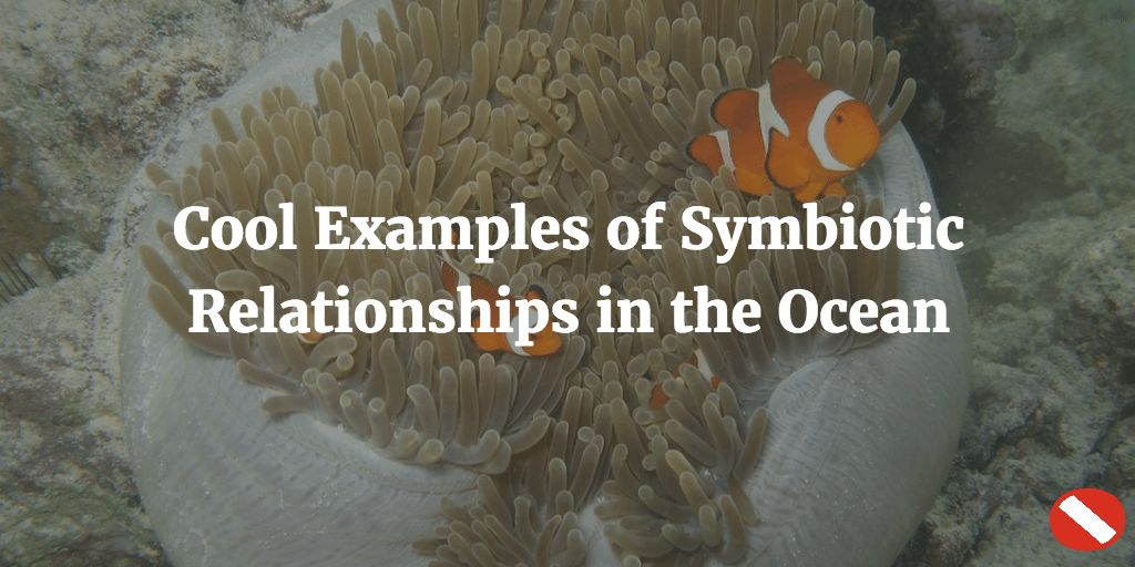 Cool-Examples-of-Symbiotic-Relationships-in-the-Ocean-horizontal.png