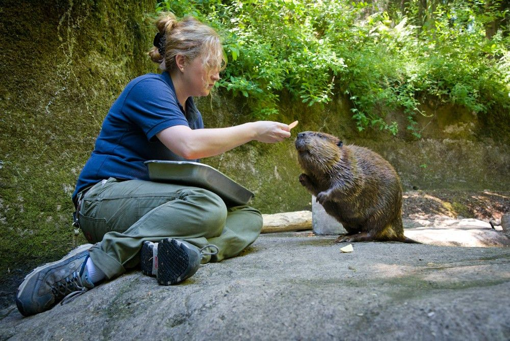 Employment | Oregon Zoo