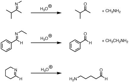 Hydrolysis of imines to give ketones (or aldehydes) — Master ...