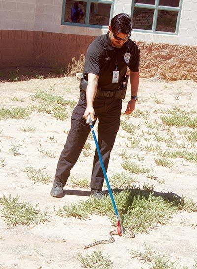 Zoologist: Snakes prefer not to bite – Navajo Times