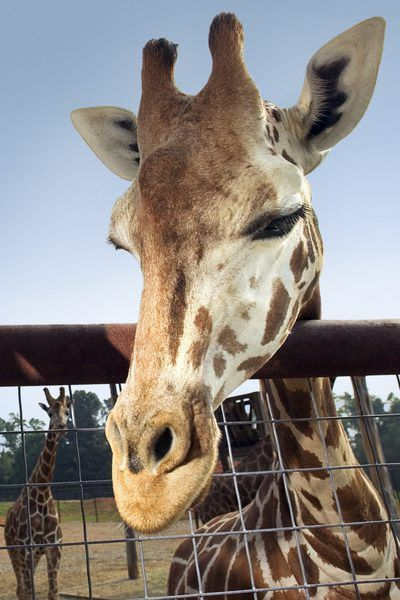 What Classes Do I Take to Be a Zookeeper? | Education - Seattle PI