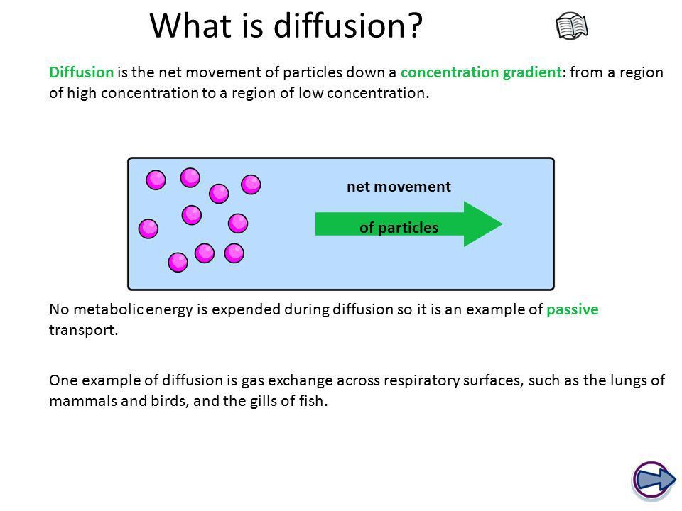 Exchanging Substances - ppt video online download