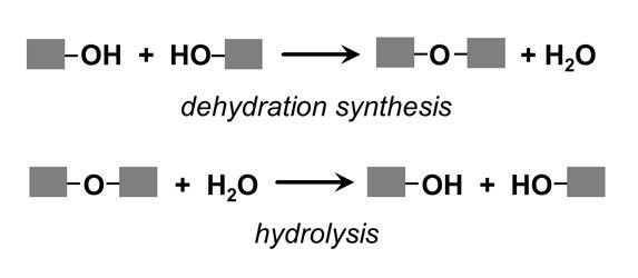 Functional Groups and Biomolecules