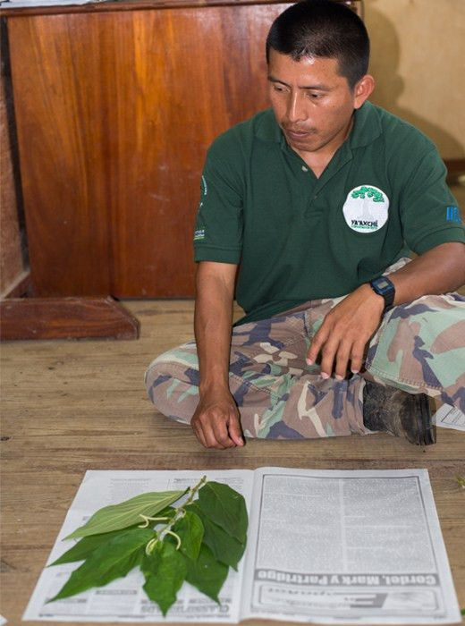 Tree conservation for zoologists   Fauna & Flora International