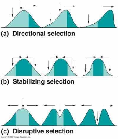 Evolution & Ecology: Natural selection, Gene flow, Speciation ...