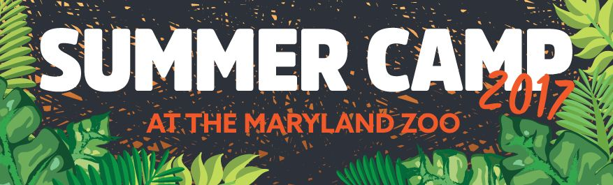 Summer Camp | The Maryland Zoo in Baltimore