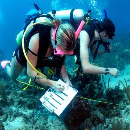 How To Become A Marine Biologist | What I want to do.. | Pinterest ...