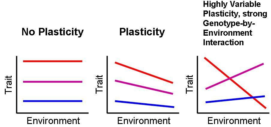 Phenotypic plasticity - Wikipedia