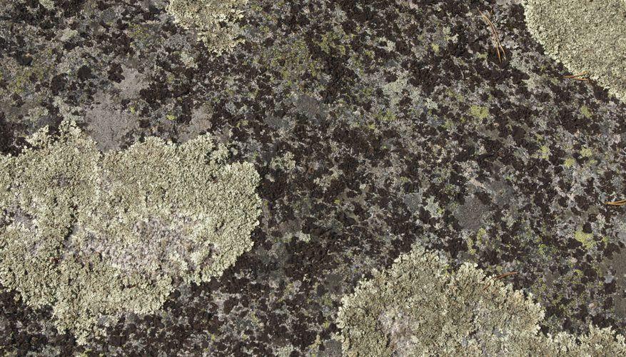 Is Lichen an Autotroph? | Sciencing