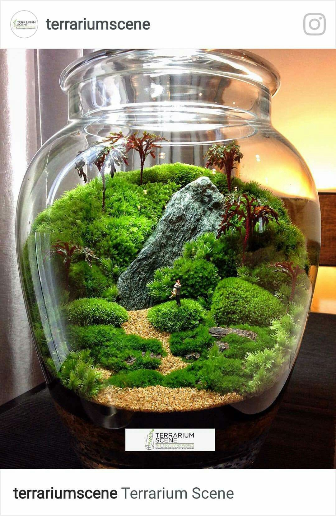 best dreams in a jar images on pinterest in fish tanks