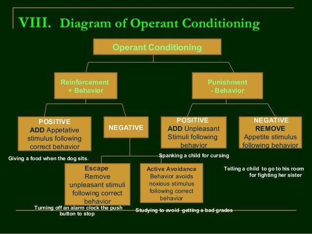 B. F. Skinner's Operant Conditioning