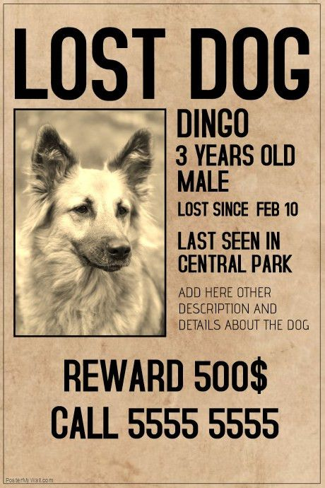 lost dog lot pet old style poster template | PosterMyWall