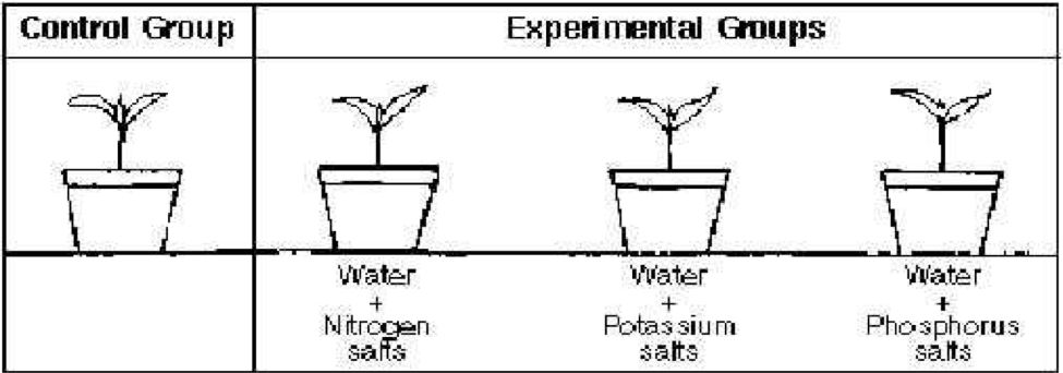 Experimental Control | Science Exposed