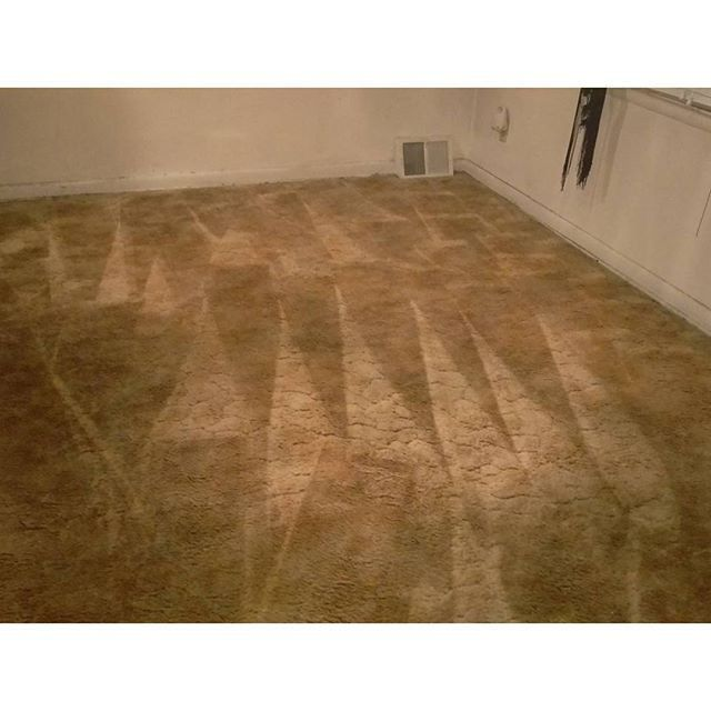 Trustworthy Ideas On Best Carpet Cleaning Company Advertising ...