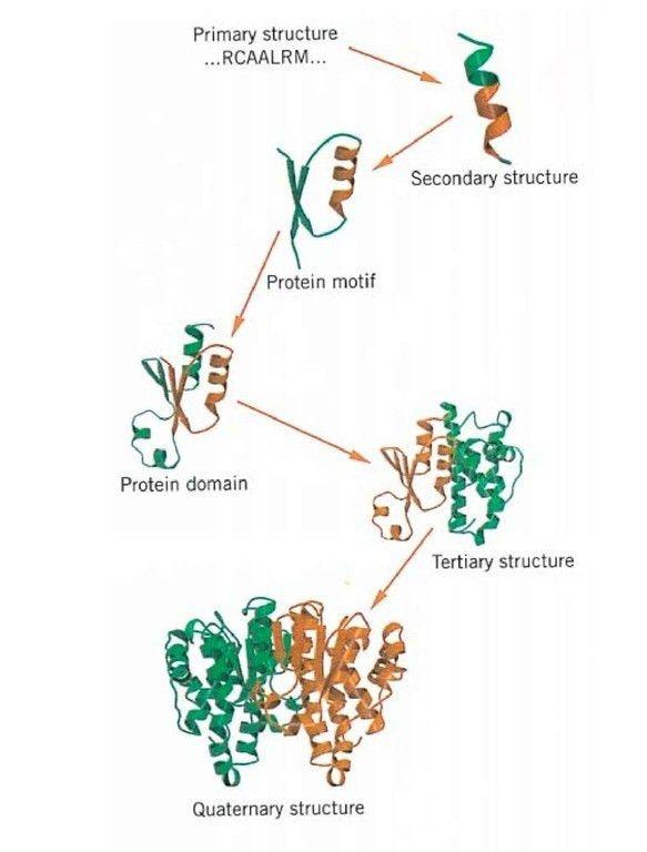 Protein Structure (Molecular Biology)