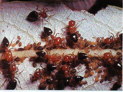 Symbiosis -- Defensive Examples