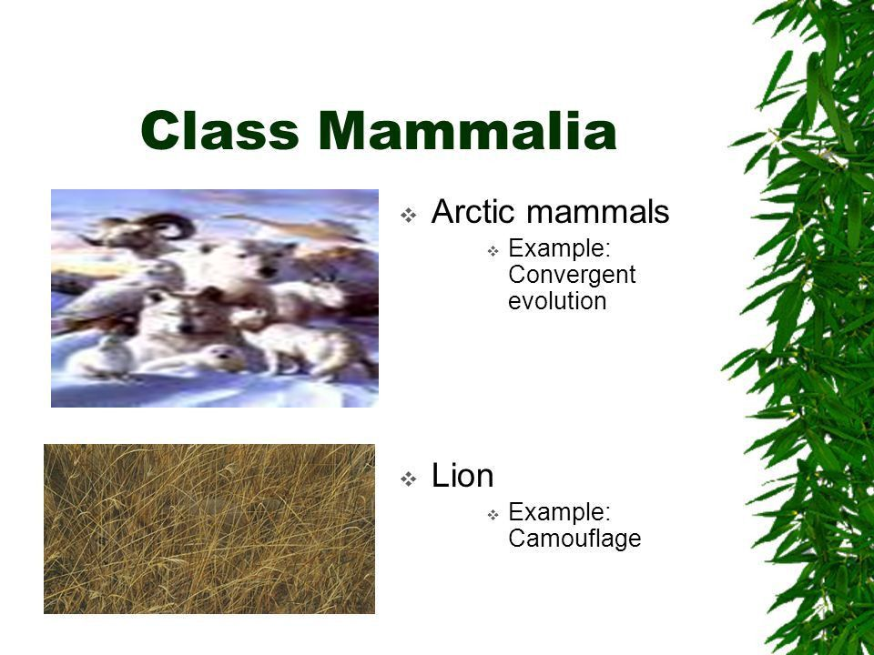 VERTEBRATES: Animals with true backbones (PHYLUM CHORDATA) - ppt ...