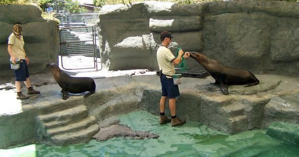 Zookeeper Career: History, Job, Requirements, Path, Outlook ...
