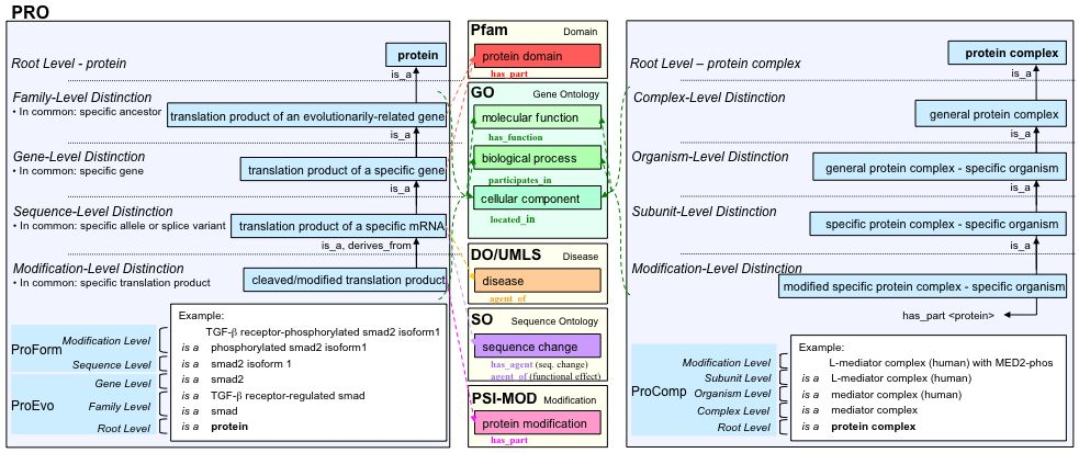 Protein Ontology