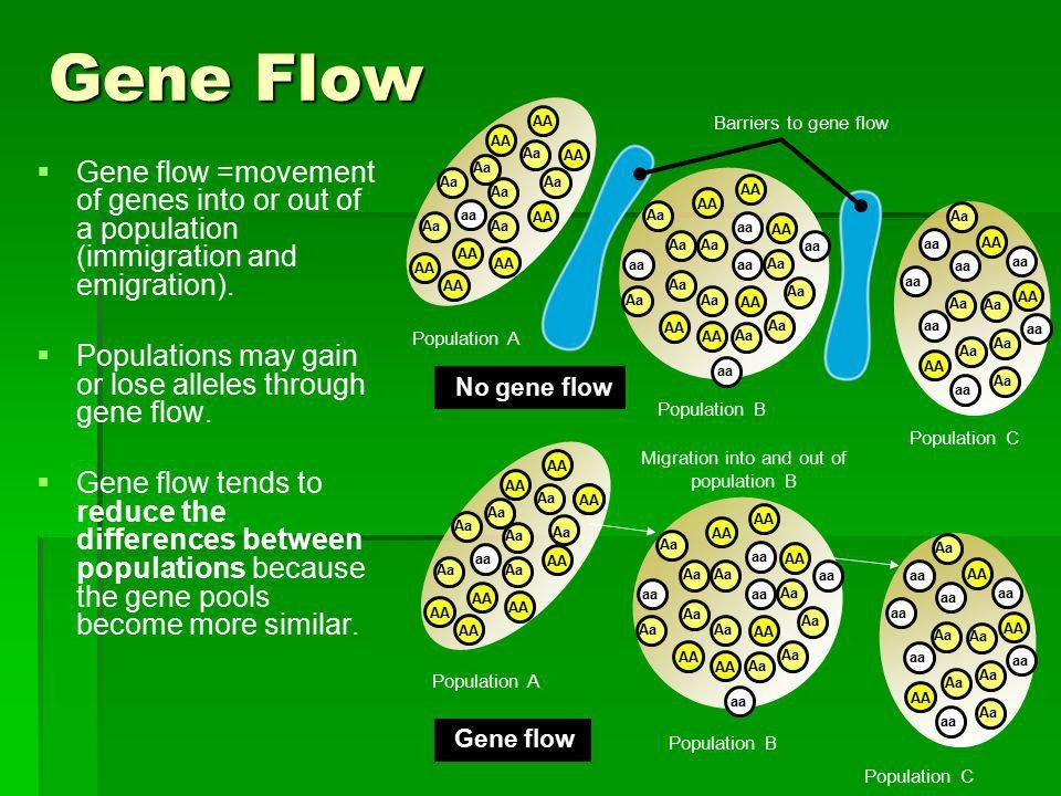 Gene Flow   Aims:   Must be able to outline, with examples ...