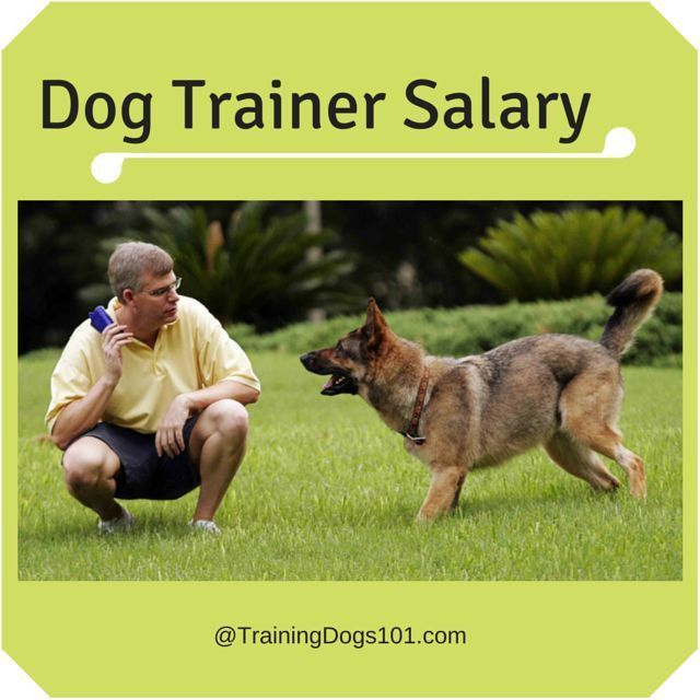 Best 25+ Dog trainer salary ideas on Pinterest | Cute baby dogs ...