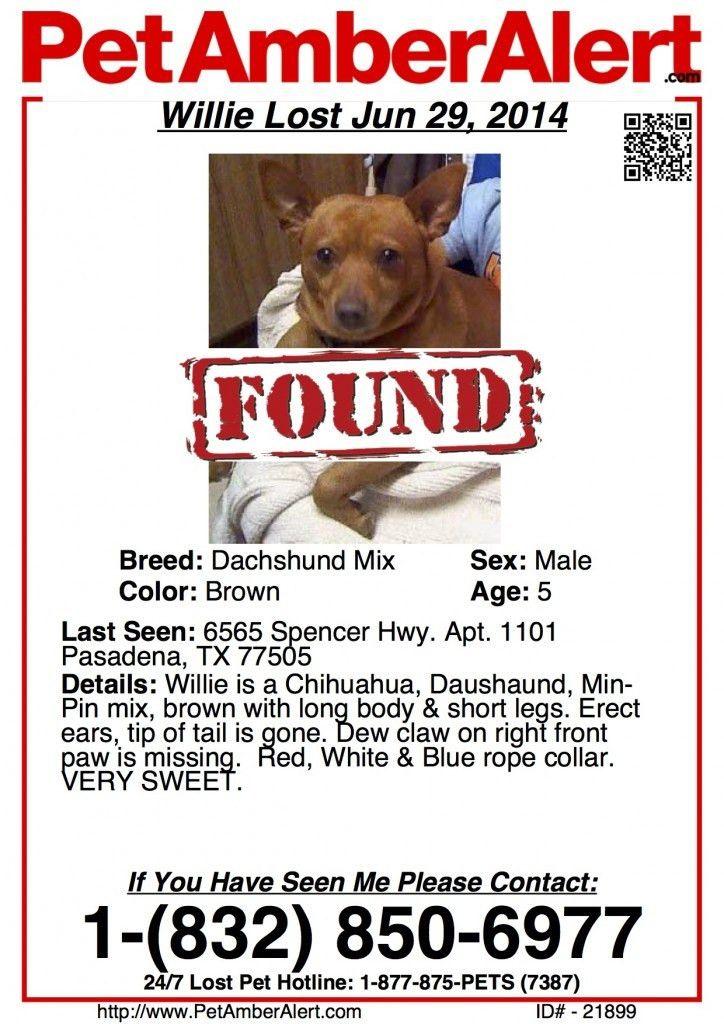 Dog Found via Poster Alert in Pasadena, TX   Pet Amber Alert