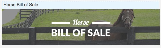 HOW MUCH DOES A HORSE COST? Buying, Vet Check, Bill of Sale ...