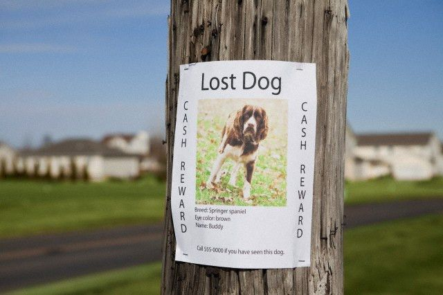 """Lost Dog""""   The Doghouse Rumor"""