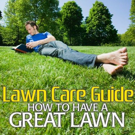 Your Green Yard - The Envy Of The Neighborhood — Lawn Care Guide ...