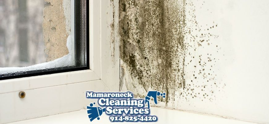 Why You Need a Professional House Cleaning Service to Do Mold ...
