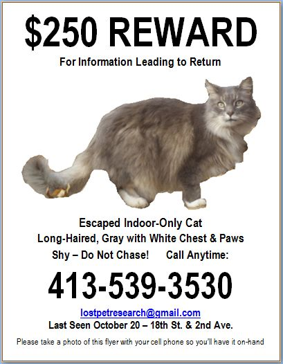 Lost Cat Template. pets flyer templates postermywall. 12 missing ...