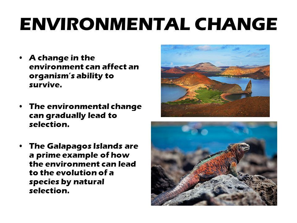 CHANGES OVER TIME. - ppt video online download