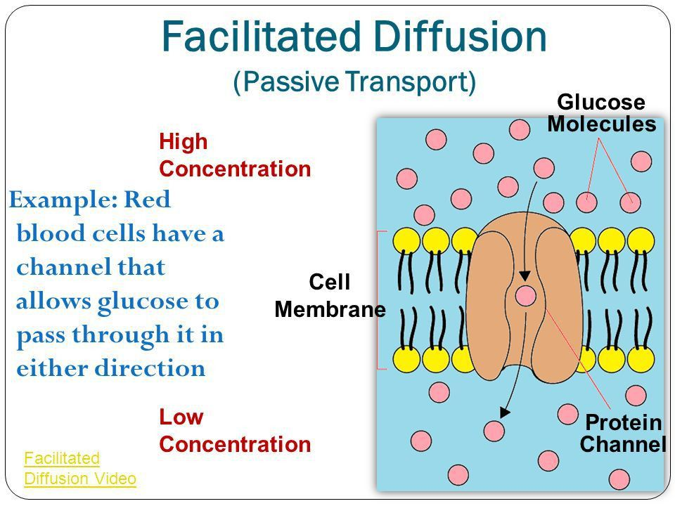 Diffusion Osmosis Solution Tonicity Active Transport Cell ...