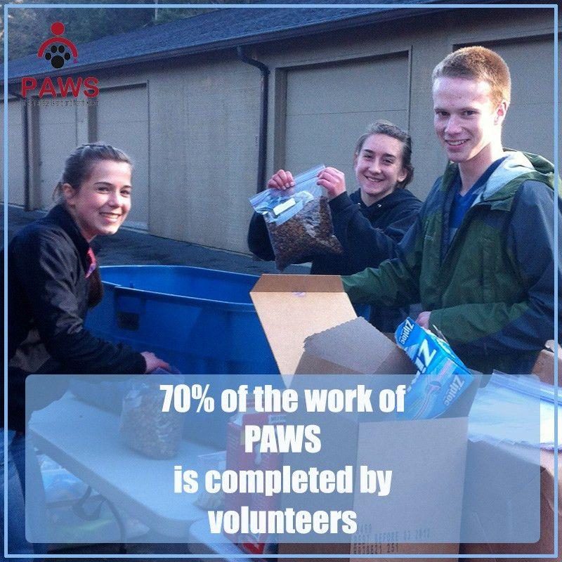 Volunteer | PAWS