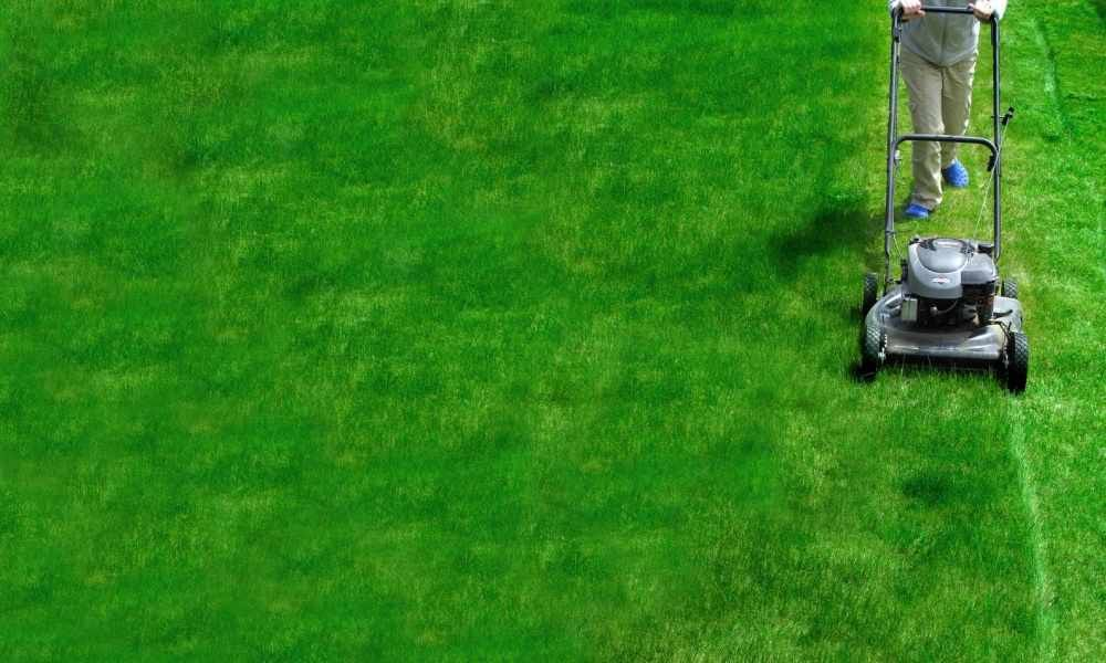 Lawn Care Business Names - The Lawn Solutions