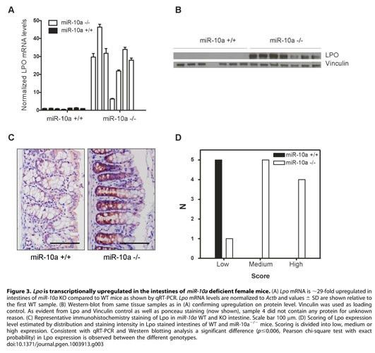 Academic OneFile - Document - Loss of miR-10a activates Lpo and ...
