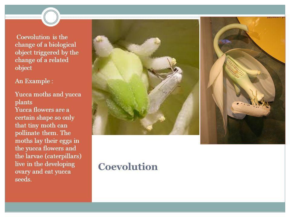 "CHRISTIAN BUENO P.2 Evolution. Charles Darwin ""Grandfather of ..."