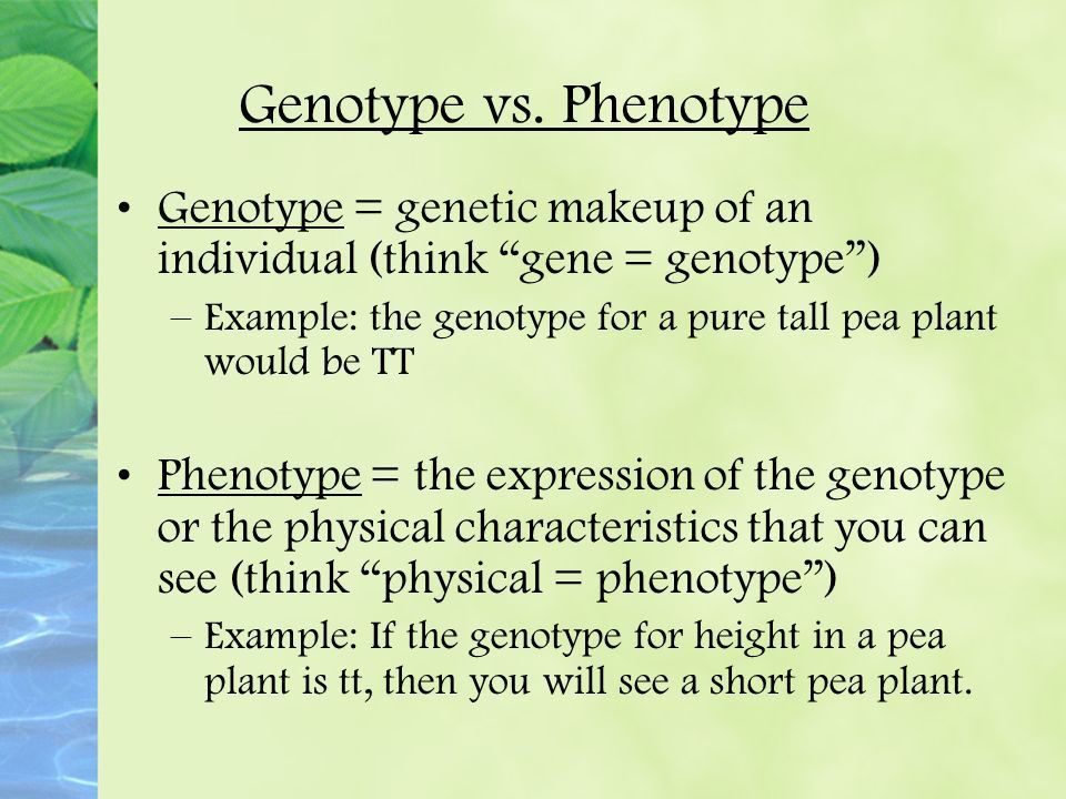 Mendel and Traits. Genetics is the study of heredity! - ppt download