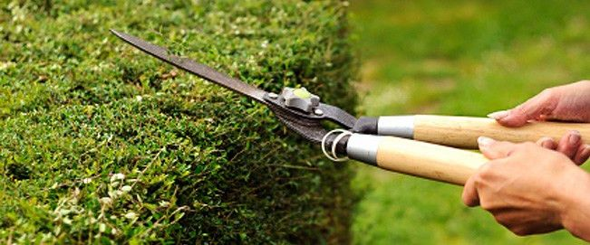 Jubelius Gardens | Gardening Services/Maintenance | Irrigation ...