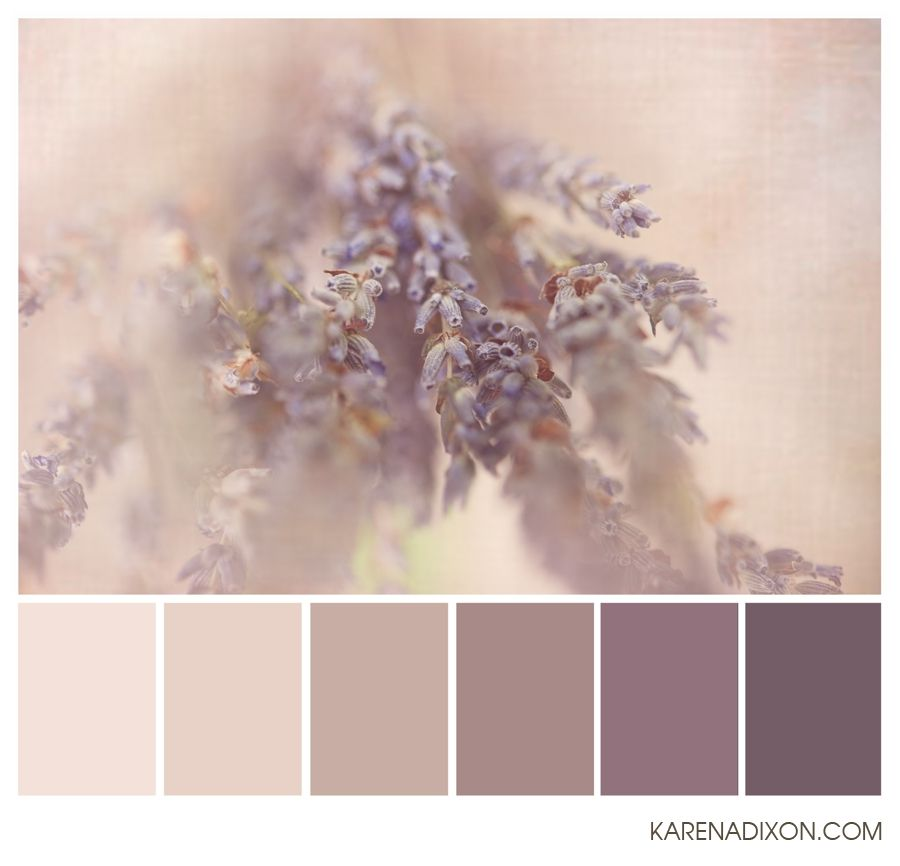 Dusty Plum French Lavender Herb Taupe These Are Good