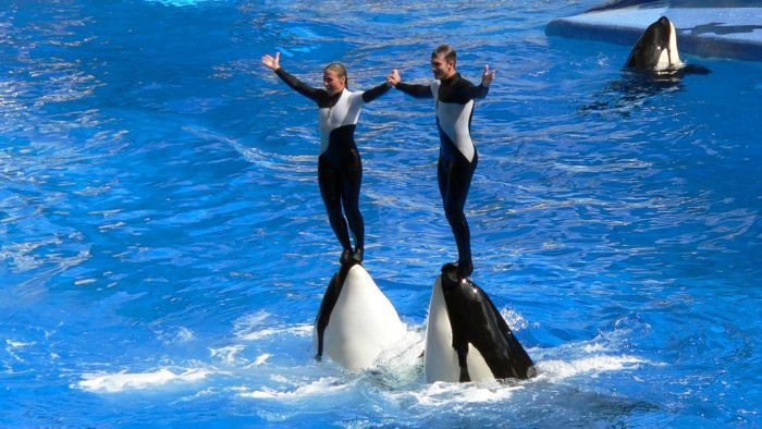 What is the salary for trainers at Sea World? | Reference.com