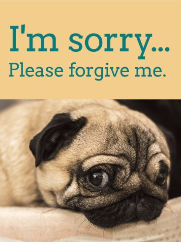 Flowers for an Apology - I'm Sorry Card | Birthday & Greeting ...