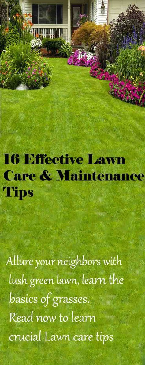16 Effective Lawn Care and Maintenance Tips | Lawn care, Lawn and LUSH