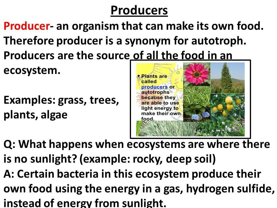 Chapter 23 Ecosystems and Biomes. 23-1: Energy Roles An organism's ...