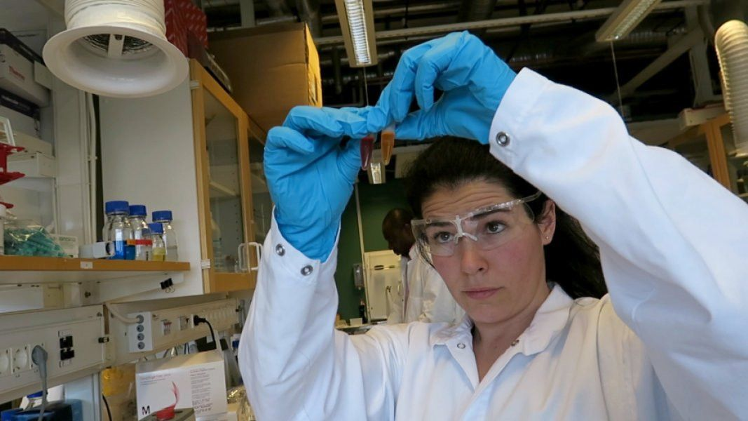 Antioxidants, plastics could be made from byproducts of wheat ...